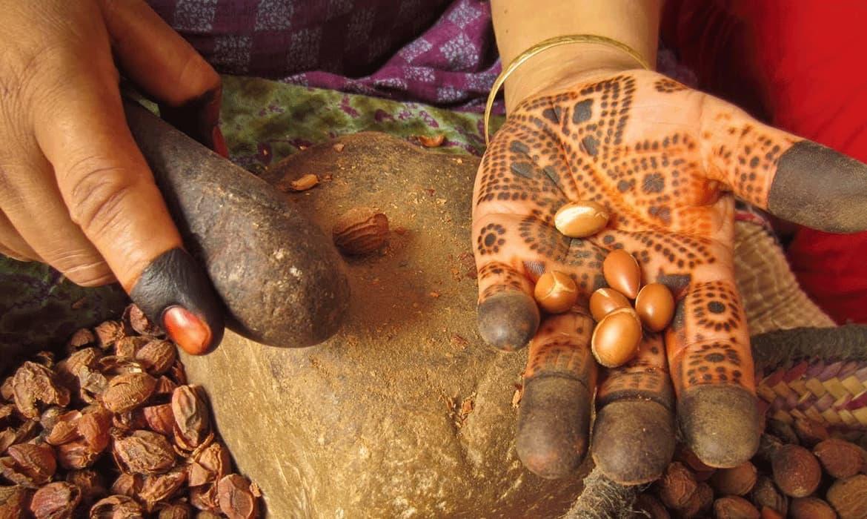 摩洛哥「黃金液體」:摩洛哥堅果油種類以及傳統摩洛哥堅果油生產介紹